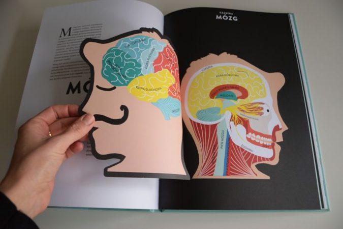 Zdjęcie Anatomia. Obraz ludzkiego ciała na wyjątkowych ażurowych rycinach Druvert Helene